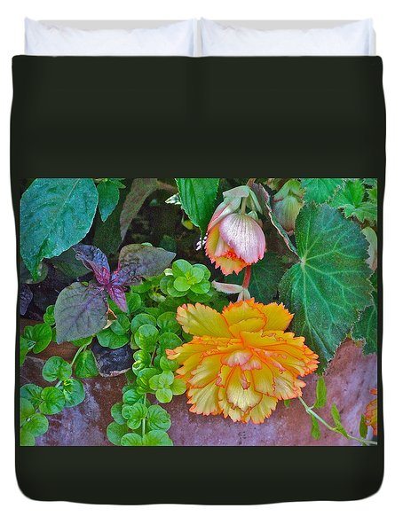 Apricot Begonia 3 Duvet Cover