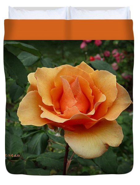 Apricot Rose Duvet Cover by Sadie Reneau