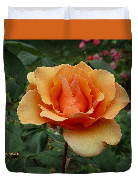 Apricot Rose Duvet Cover