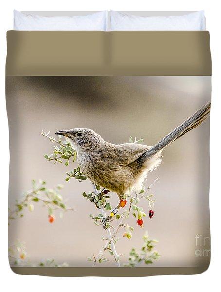 Arabian Babbler Duvet Cover