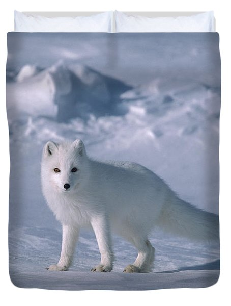 Arctic Fox On The North Slope Duvet Cover