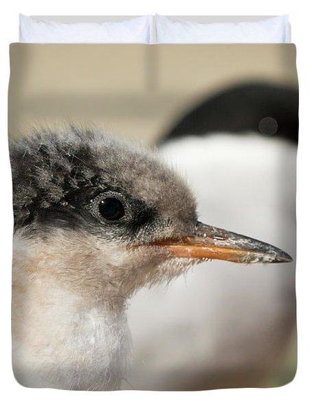 Arctic Tern Chick With Parent - Scotland Duvet Cover