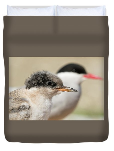 Arctic Tern Chick With Parent - Scotland Duvet Cover