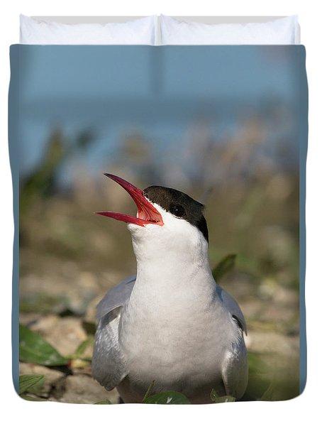 Arctic Tern - St John's Pool, Scotland Duvet Cover