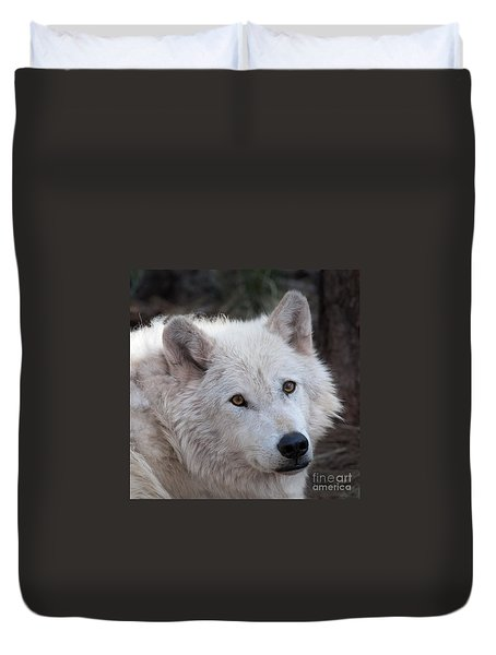 Duvet Cover featuring the photograph Artic Wolf by Laurinda Bowling