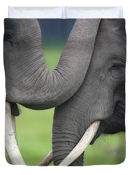 Asian Elephant Greeting Duvet Cover by Cyril Ruoso
