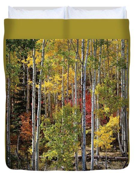 Aspen And Red Maple Duvet Cover