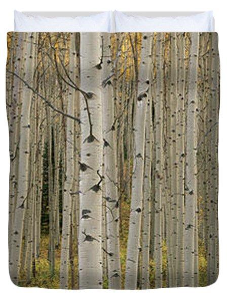 Aspen Grove In Fall, Kebler Pass Duvet Cover