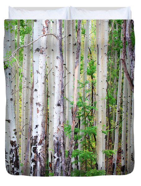 Aspen Grove In The White Mountains Duvet Cover by Donna Greene