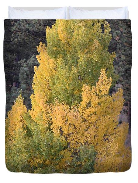 Aspen Tree Fall Colors Co Duvet Cover