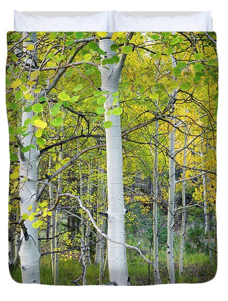 Aspens In Autumn 6 - Santa Fe National Forest New Mexico Duvet Cover by Brian Harig