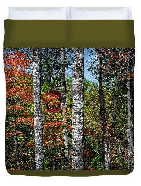 Duvet Cover featuring the photograph Aspens In Fall Forest by Elena Elisseeva