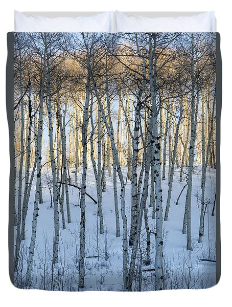 Aspens In Shadow And Light Duvet Cover