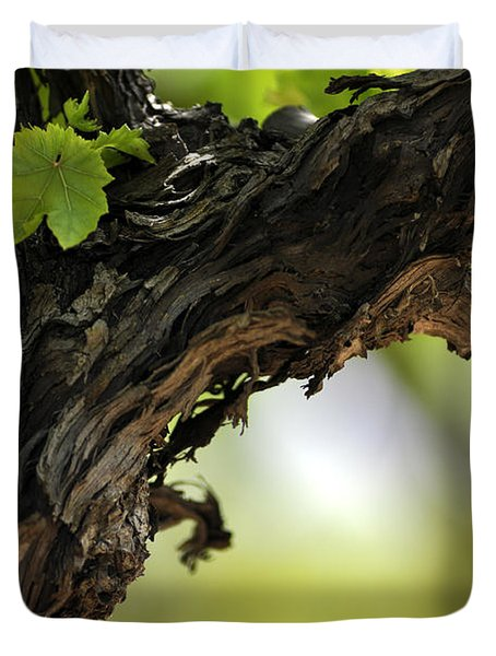Duvet Cover featuring the photograph At Lachish Vineyard by Dubi Roman