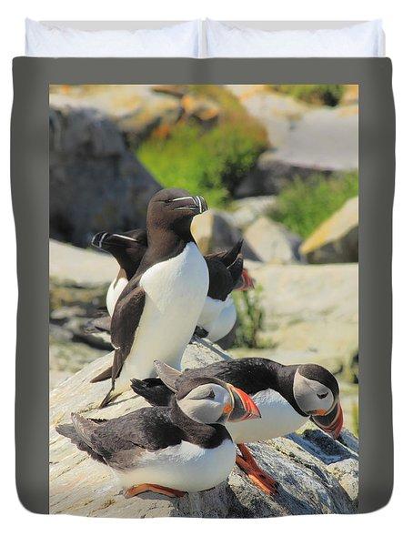 Atlantic Puffins And Razorbill Duvet Cover by John Burk