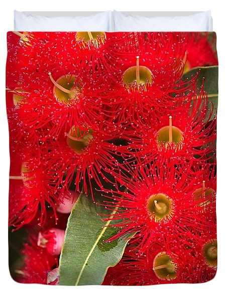 Australian Red Eucalyptus Flowers Duvet Cover