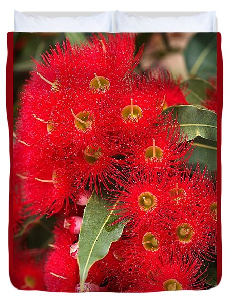 Australian Red Eucalyptus Flowers Duvet Cover by Joy Watson