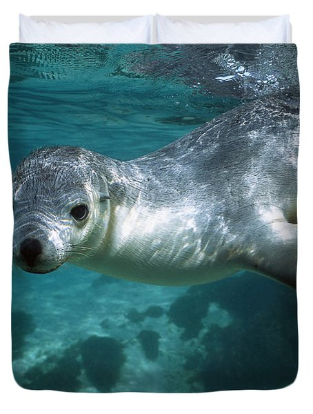 Australian Sea Lion Neophoca Cinerea Duvet Cover by Hiroya Minakuchi
