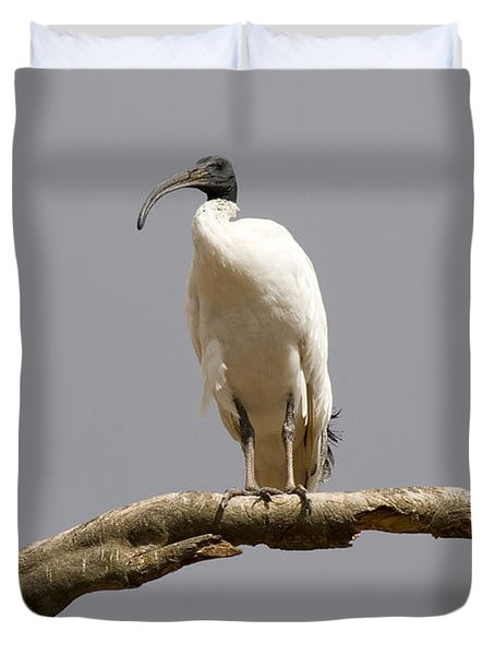 Australian White Ibis Perched Duvet Cover