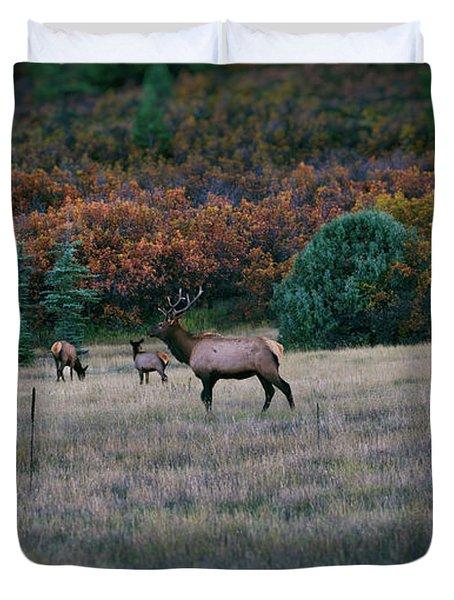 Autumn Bull Elk Duvet Cover