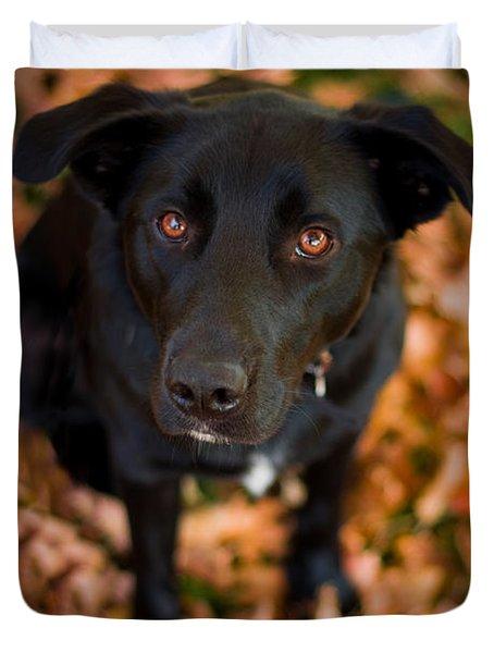 Autumn Dog Duvet Cover by Adam Romanowicz