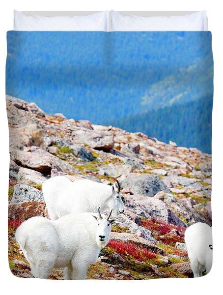 Autumn Goats On Mount Bierstadt Duvet Cover