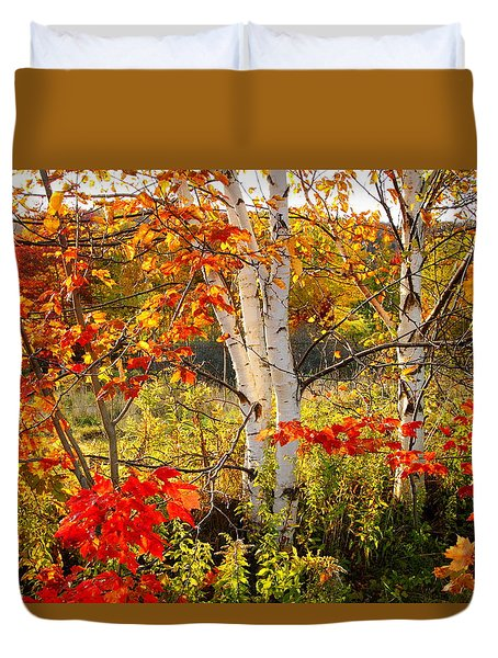 Autumn Scene With Red Leaves And White Birch Trees, Nova Scotia Duvet Cover