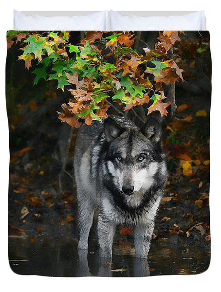Duvet Cover featuring the photograph Autumn Wolf by Shari Jardina