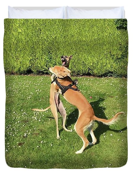 Ava The Saluki And Finly The Lurcher Duvet Cover by John Edwards