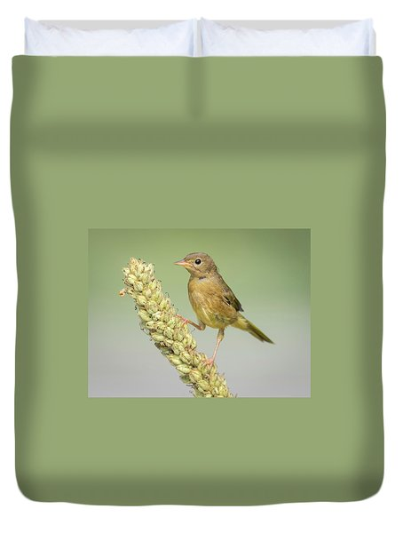Baby Common Yellow Throat Warbler Duvet Cover