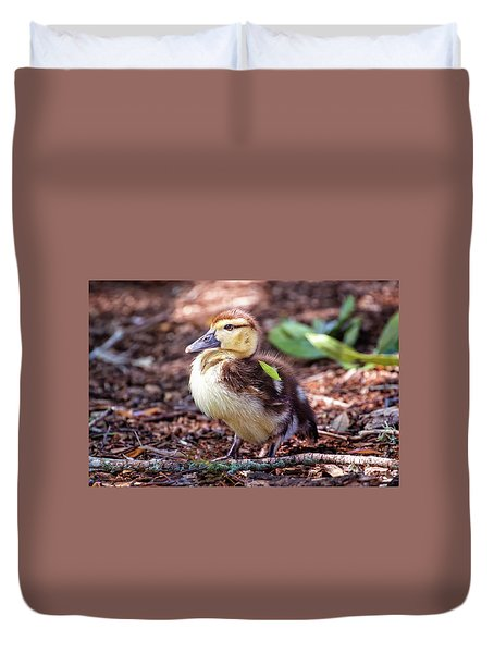 Baby Duck Sitting Duvet Cover by Stephanie Hayes