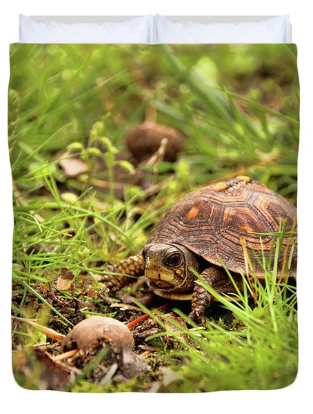 Baby Eastern Box Turtle Duvet Cover