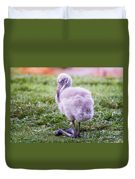 Baby Flamingo Sitting Duvet Cover by Stephanie Hayes