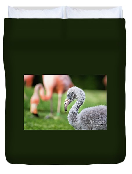 Baby Flamingo With Mom In Background Duvet Cover