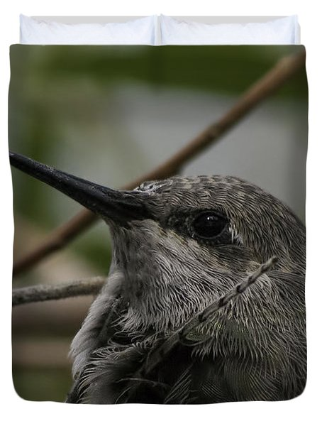 Baby Humming Bird Duvet Cover