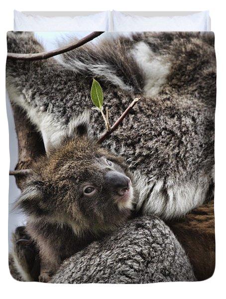 Baby Koala V2 Duvet Cover by Douglas Barnard