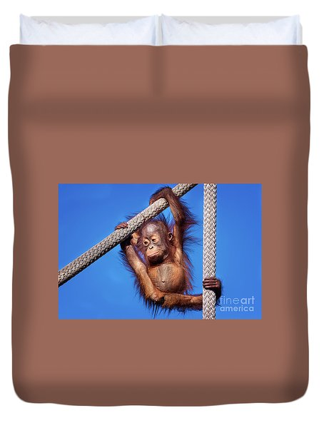 Baby Orangutan Hanging Out Duvet Cover by Stephanie Hayes