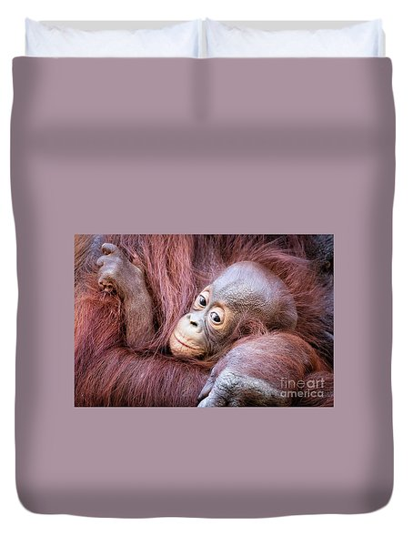 Baby Orangutan Duvet Cover by Stephanie Hayes