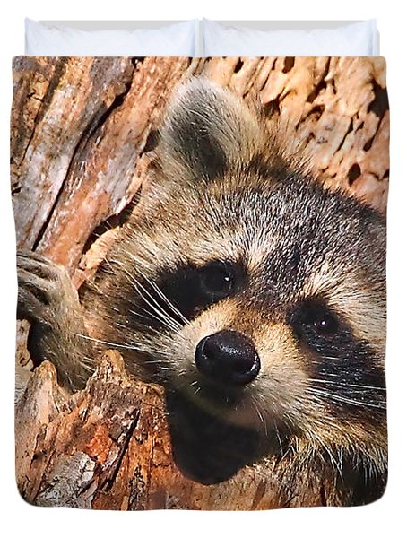 Baby Raccoon Duvet Cover by William Jobes