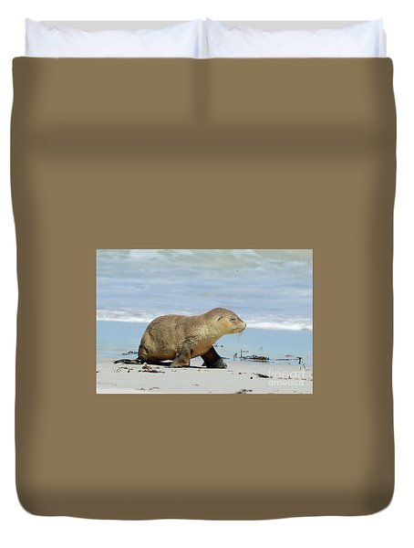 Baby Sea Lion On Seals Bay Duvet Cover