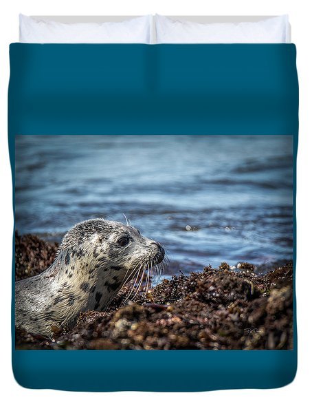 Baby Seal Duvet Cover