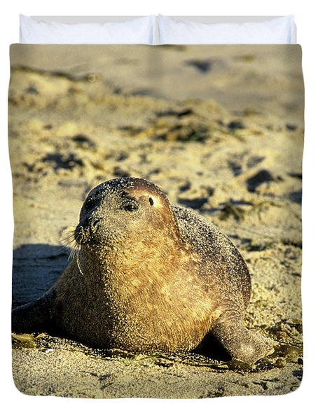 Baby Seal In Sand Duvet Cover