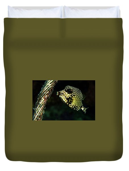 Duvet Cover featuring the photograph Baby Trunk Fish by Jean Noren