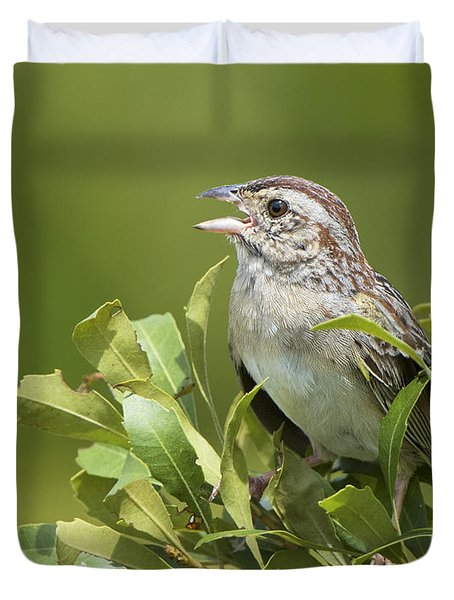 Bachman Sparrow Duvet Cover