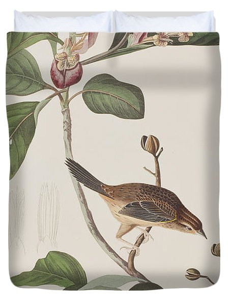 Bachmans Sparrow Duvet Cover by John James Audubon