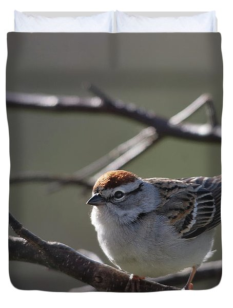 Duvet Cover featuring the photograph Backlit Chipping Sparrow by Susan Capuano