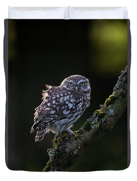 Backlit Little Owl Duvet Cover