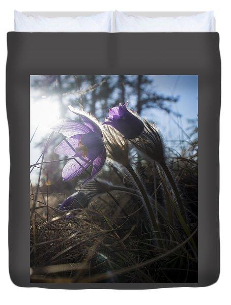 Backlit Pasque Flowers Duvet Cover
