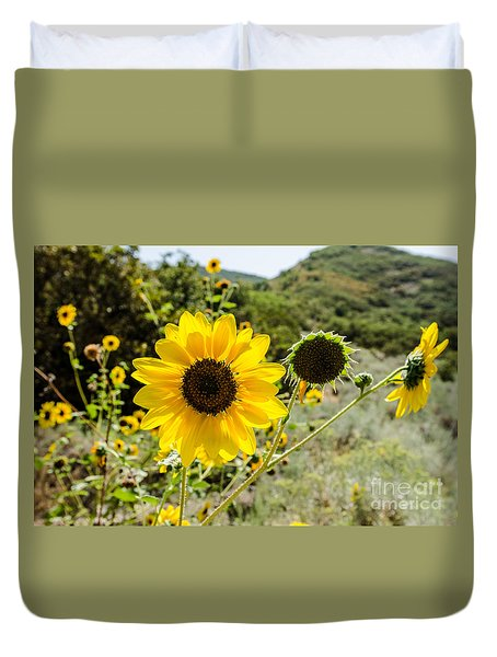 Backlit Sunflower Aka Helianthus Duvet Cover by Sue Smith