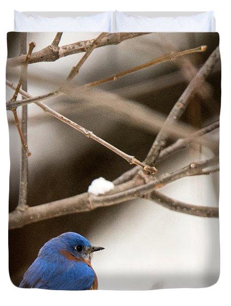 Backyard Bluebird Duvet Cover